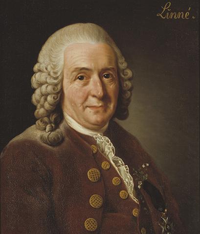 Портрет К. Линнея работы А. Рослина (1775)